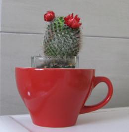 Little pot plant