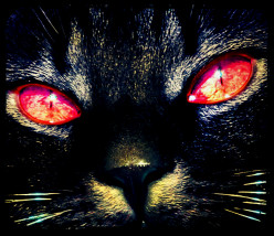 Paranormal Creatures: Washington D.C.'s Demon Cat