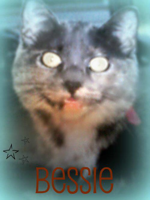 My cat Bessie 10 years old