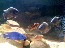 Psychological Explanations of Aquarium Fish