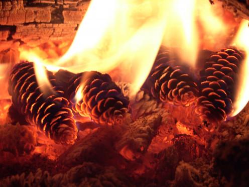 Pine Cones In Fire