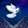 samikan profile image