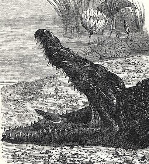 Smile Awhile Crocodile