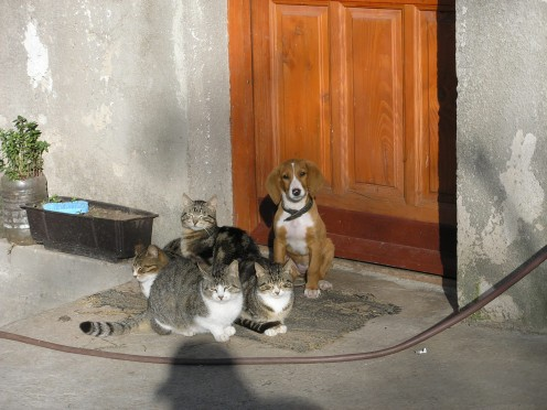 Cats and a Dog together