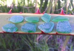 Eight small pieces of green sea glass.
