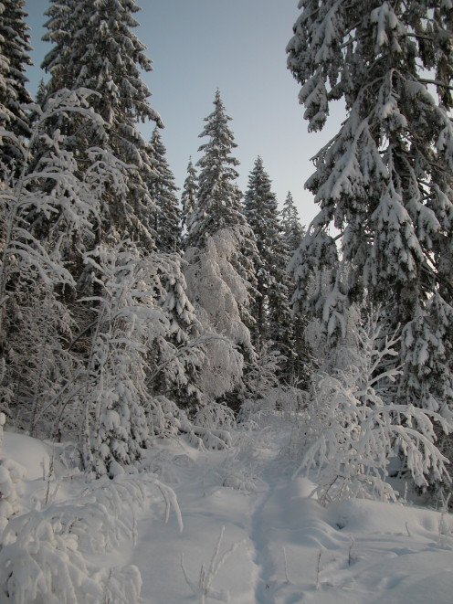 Snowy Forest Trails Finland