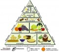 Best and Worst Diets Ranked by Purpose, Efficiency and Objective