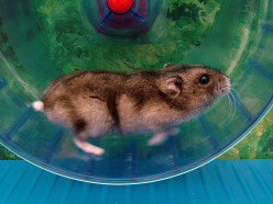 How to Select the Right Hamster Wheel for Your Hamster