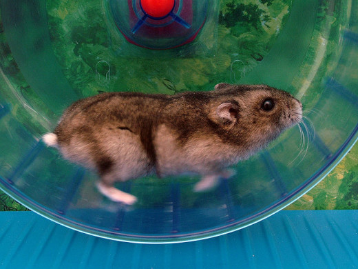 Your hamsters wheel is very important and choosing the right wheel for your hamster is very important for the safety of your hamster friend.