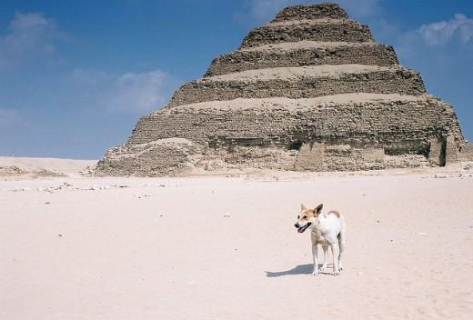 A modern Egyptian dog.