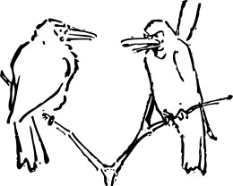 Pair of birds talking. Hey, if they can talk about emotions, so can you!