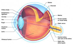 LASIK VS PRK Eye Corrective Surgery