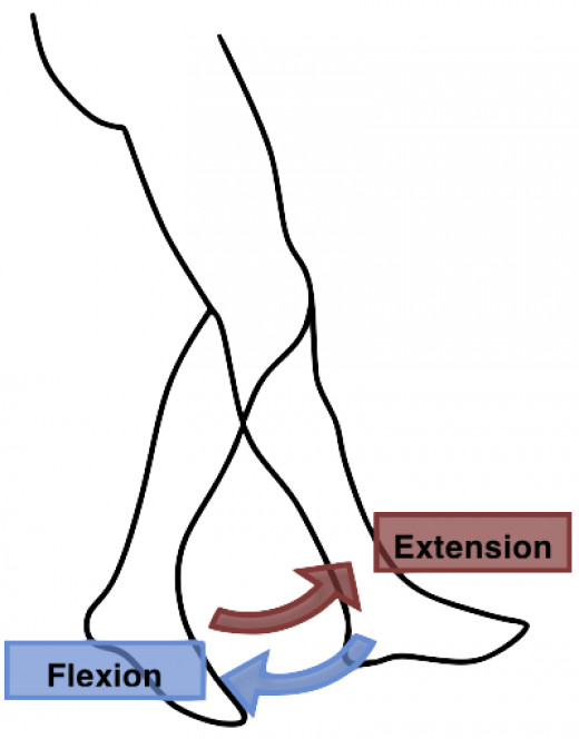 Extension and Flexion, such as the movement of walking, occurs on the Sagittal Plane