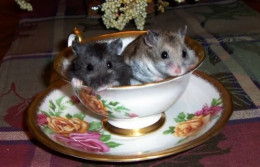 Don't you think the hamsters in this photo are so cute.