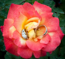 Choose the wedding rings for your wedding day.