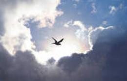 The Bird of Hope.