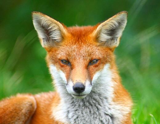 A criminal mastermind with eyes like these? Creepy!