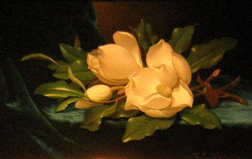 Magnolias are a symbol of nobility, perseverance and love of nature.