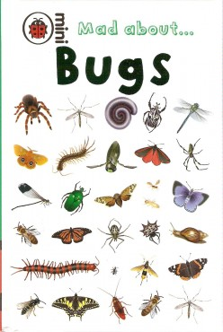 Rid Your Home of Insect Pests