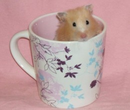 Don't you think this hamster is so cute in the coffee cup. Looks like he is enjoying a morning cup of coffee.
