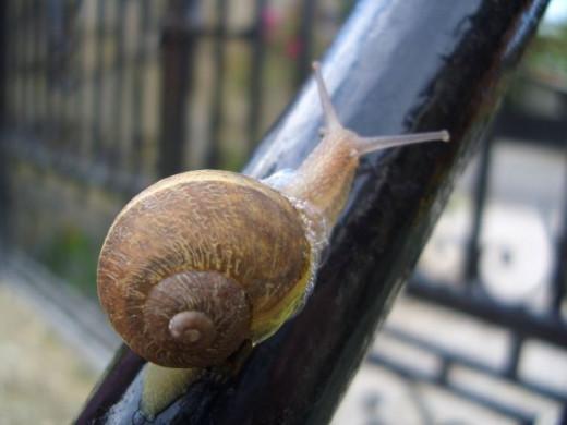 Snails go slowly - Lento or even Lentissimo