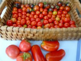 Reisenstaub and paste tomatoes