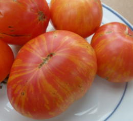 Bi-colored Copia Beefsteak is as beautiful inside as they are outside.