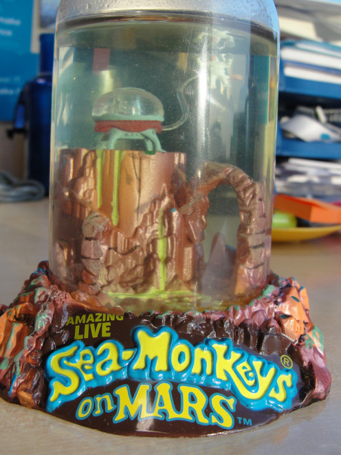 Your pet sea-monkeys are not allowed on the plane!