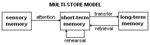 The Three Stage Processing Model is the leading theory as to how our memory works.