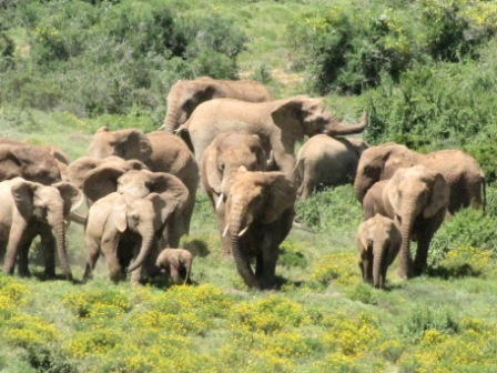 Elephants are sociable animals