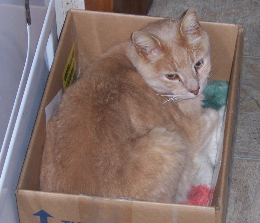 He may look cute laying in his box, but he's been shuttling miniature intruders home.