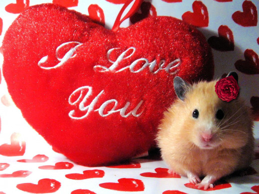 Be my Valentine, Hammie?