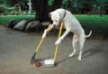 Easy Training Tips For Canines