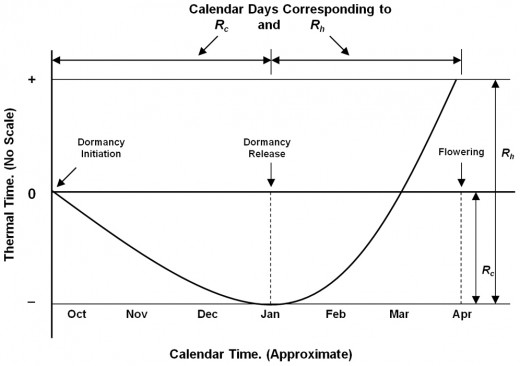 Illustration of the model used for predicting peak blooming date in cherry blossoms.