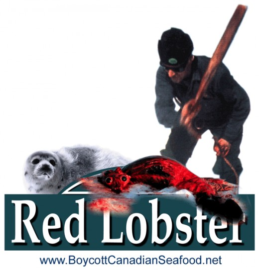 Red Lobster restaurant chain buys more Canadaian seafood than any other U.S. wholesale customer and can do more to end the $16 million Canadian seal hunt than any other company.