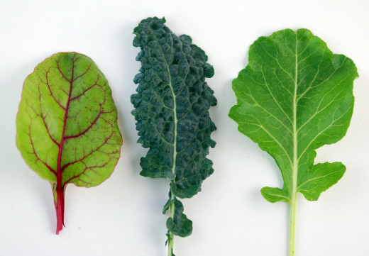 From left to right: Swiss Chard, Kale, and Spinach, all of which are dark leafy green super foods great for your skin and easy to plant in your backyard!