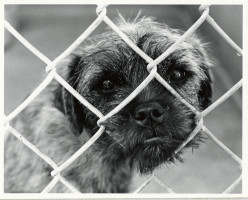 Things to consider when adopting a dog:rescuing dogs from animal shelters