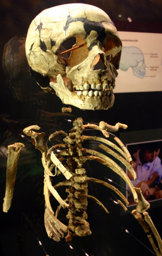 Bones of a Neanderthal child
