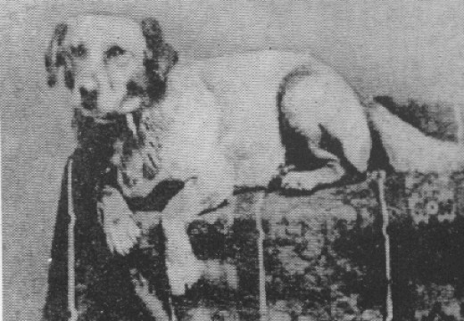 Fido was the first Presidential dog to be photographed.