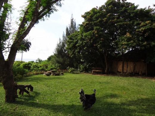 Bunhayag Ground