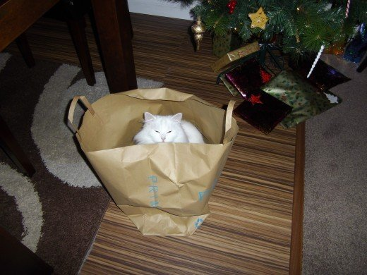Cat hiding in a paper bag