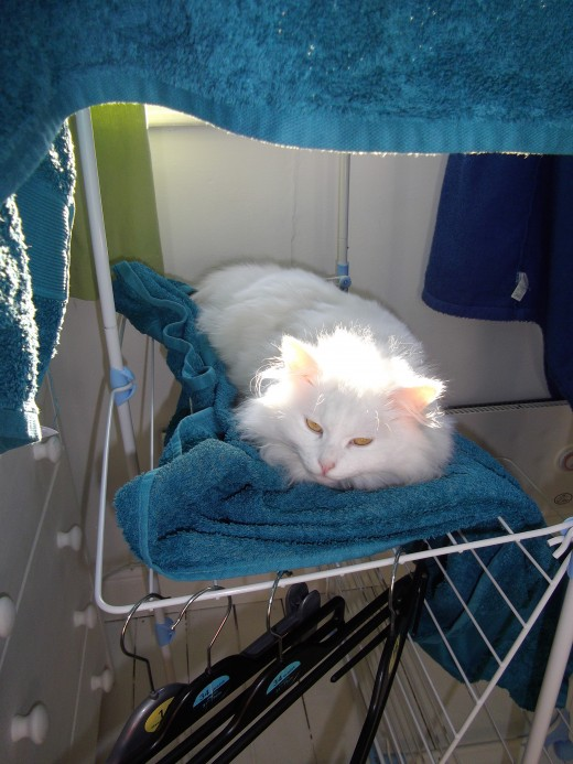 White cat sitting on a wet towel.