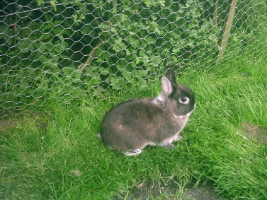 Pet rabbit enjoying the garden