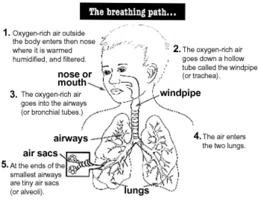Our breathing pathophysiology