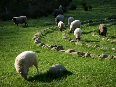 Sheep in Labyrinth Pasture