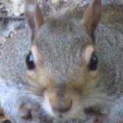 neserita profile image