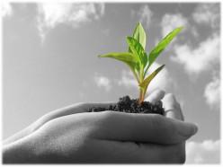 Understanding Organic Content
