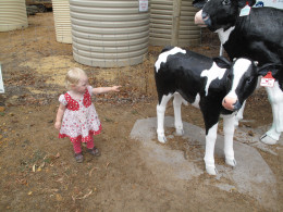 Mammal stands for mammary gland, we have them to produce milk for our young!