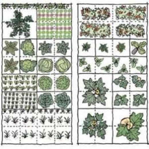Sketch out where you will be planting seeds and plants