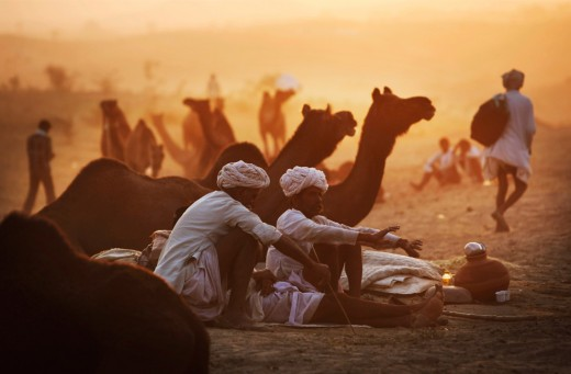 Pushkar Camel Fair is one of the largest Cattle Fairs in India